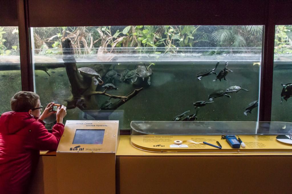 Turtle exhibit at the zoo