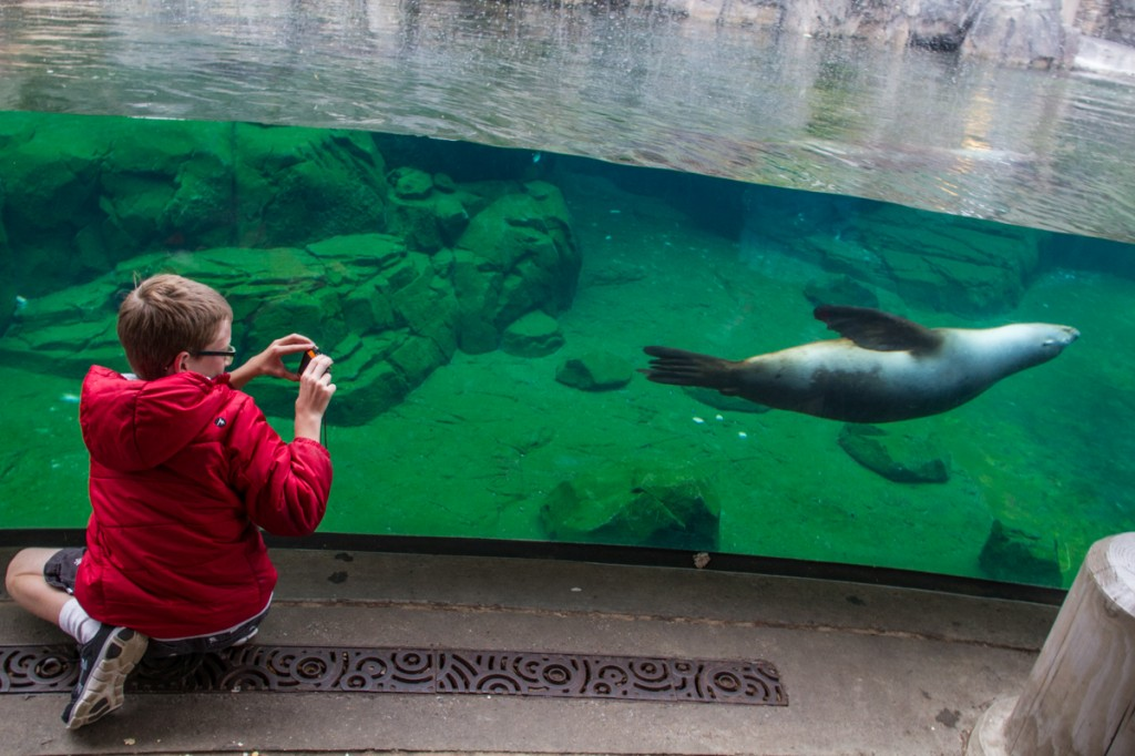 The seal exhibit at the National Zoo