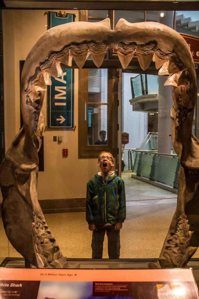 prehistoric jaws of the Giant Great White
